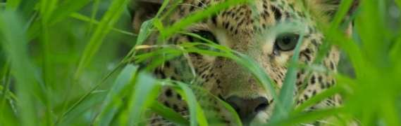 Go Wild on Safari in Kenya